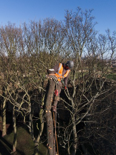 Aerial photography using a drone of tree surgeon at work
