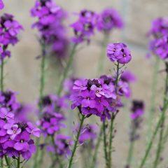 garden photography sheffield